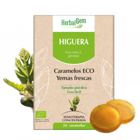 HIGUERA - 24 chicles | Herbalgem